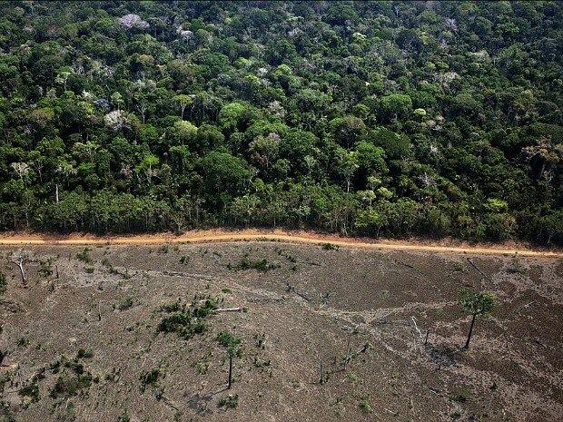 Área recentemente desmatada na Amazônia (Foto: Marizilda Cruppe/Greenpeace)