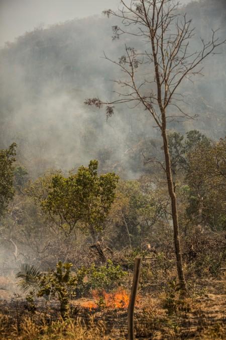 Queimada na região do Matopiba (Foto: Thiago Foresti/Ipam)