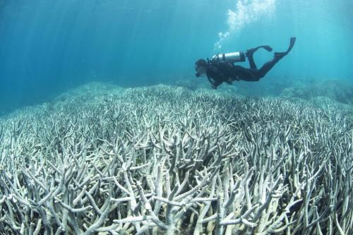 Corais embranquecidos na ilha Heron, Austrália (Foto: Richard Vevers/The Ocean Agency/Catlin Seaview Survey)
