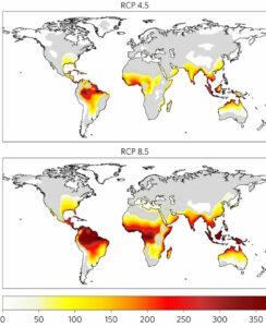 Projeções de dias de calor mortal (o vermelho indica maior frequência no ano) nos cenários de emissões moderadas (no alto) e altas (acima). Fonte: