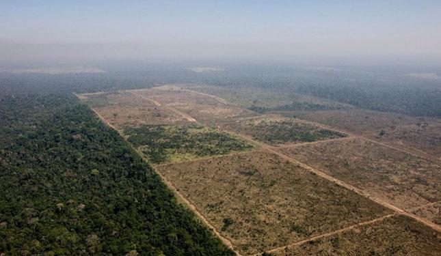 Área desmatada na Floresta Nacional do Jamanxim (Foto: Daniel Beltrà/Greenpeace)