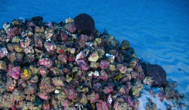 coral1-1024x683