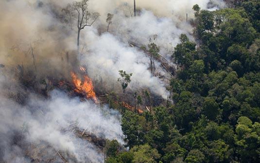 Taxa de mortalidade de árvores de florestas tropicais úmidas mostra sinais de aceleração nos últimos anos. Perda de folhas facilita as queimadas. (Foto: Daniel Beltra/Greenpeace)
