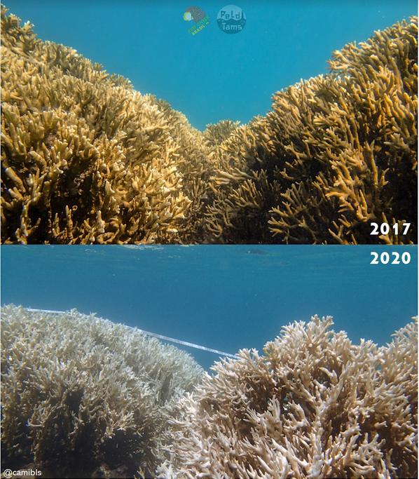 Antes e depois (Foto: Camila Brasil/Reefcheck/Peld/Tams-UFPE)
